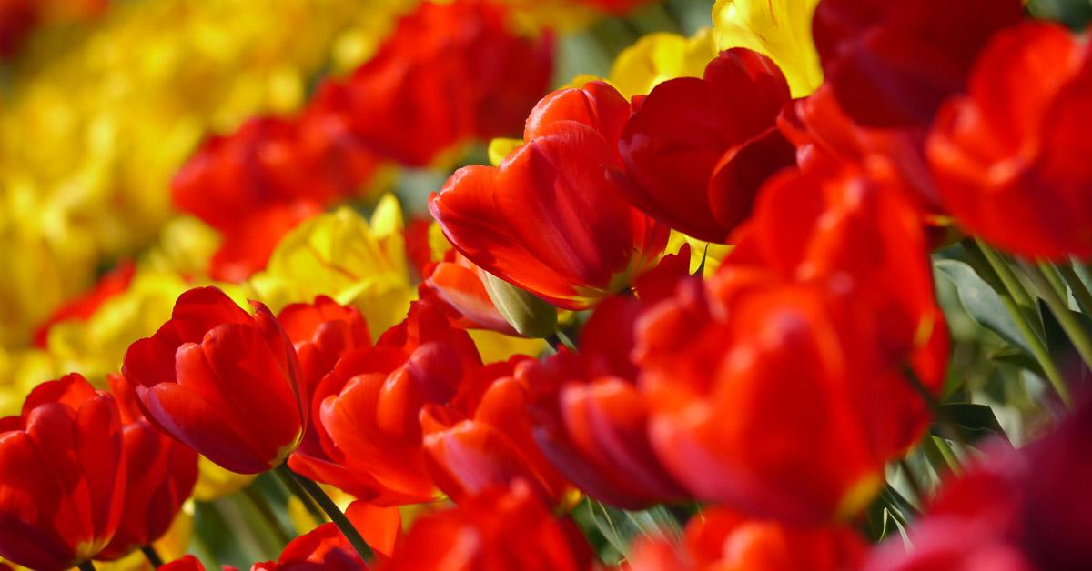 Conseils de printemps que faire dans votre jardin en avril fioulreduc - Que faire au jardin en avril ...