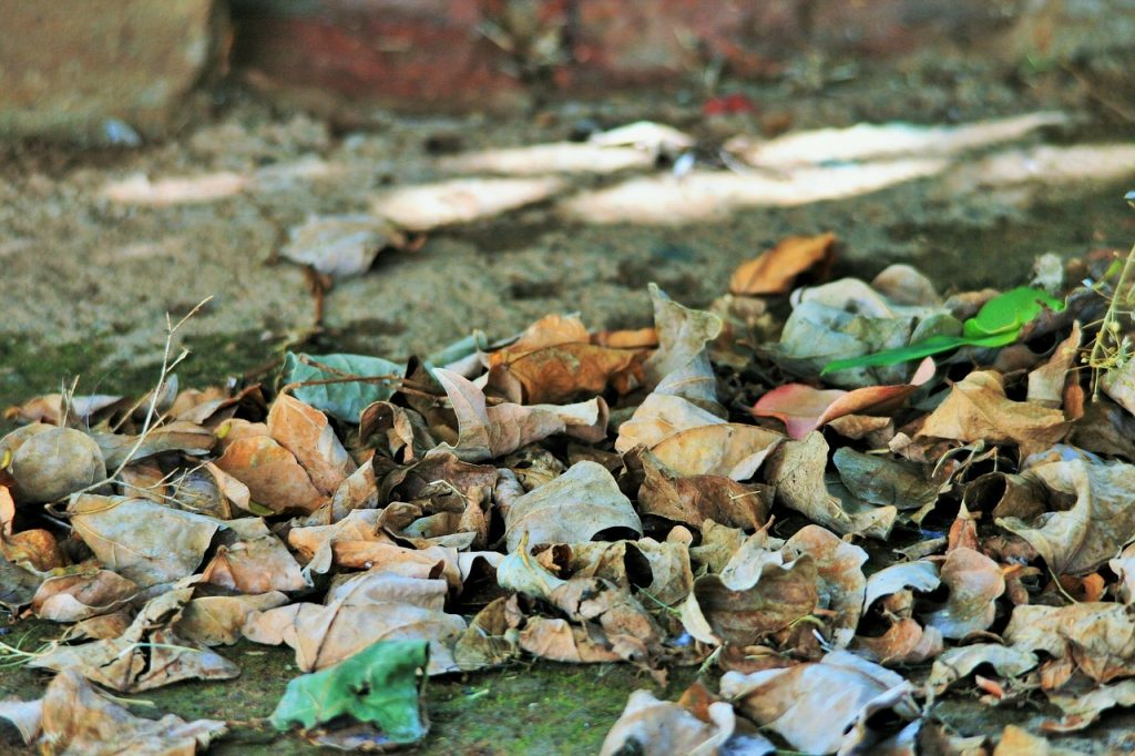 feuilles mortes dans le jardin