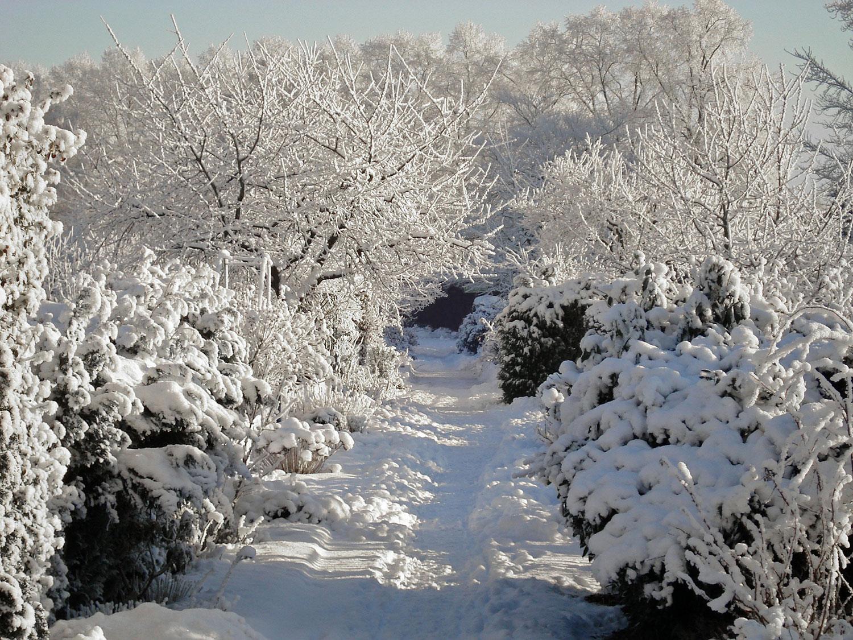 5 conseils pour pr parer et prot ger son jardin pour l for Jardin anglais en hiver