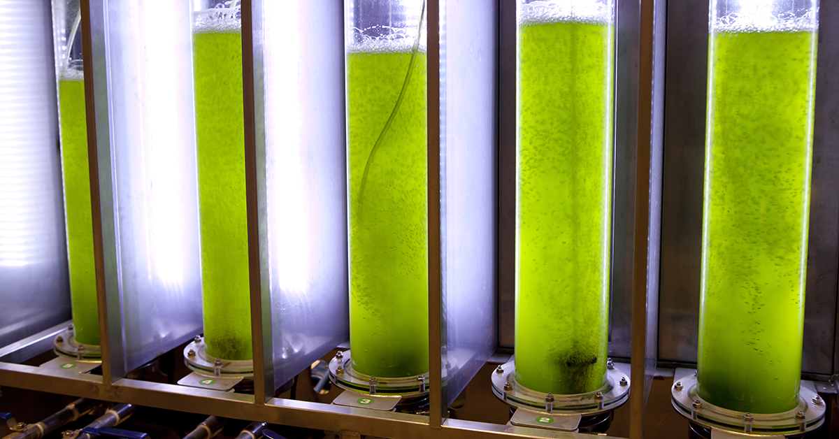 micro algue bio petrole
